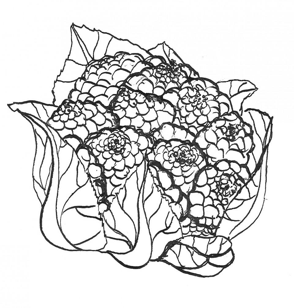 Cauliflower and cabbage 300dpi