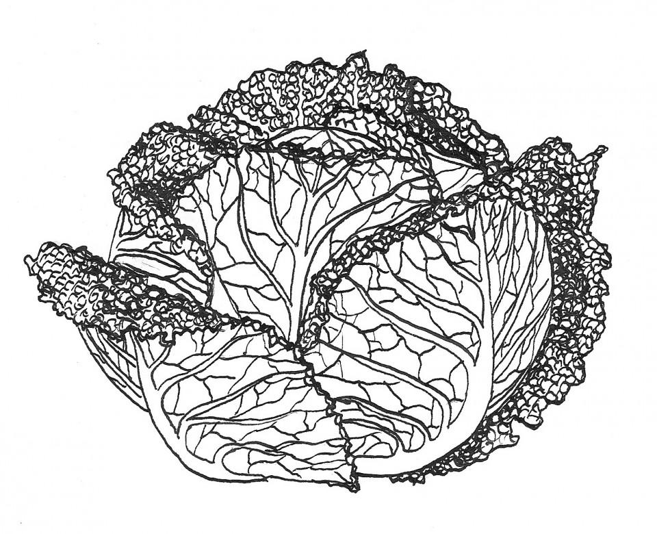 Cauliflower and cabbage 300dpi - Version 2