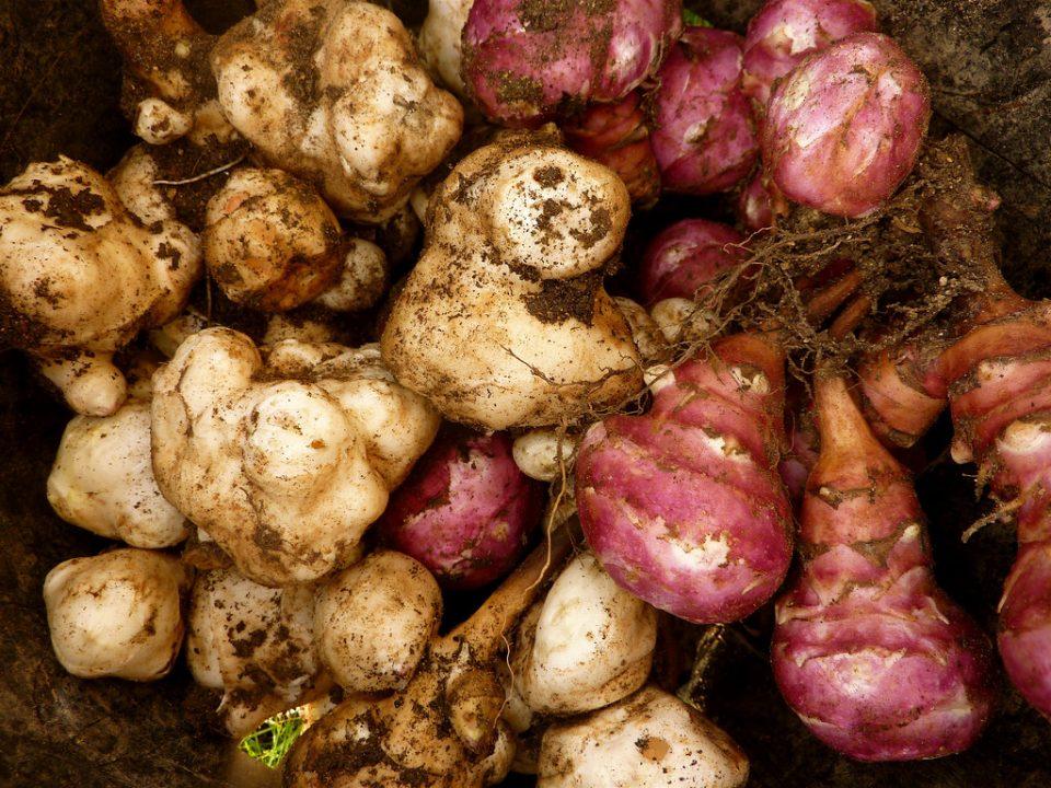 Forgotten vegetables
